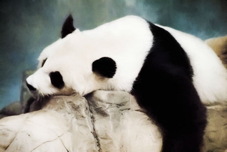 What is panda syndrome?