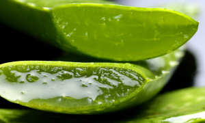 Aloe Vera - additives in personal lubricants
